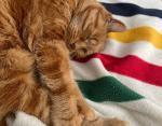 19-летняя кошка всегда держит во сне себя за лапку