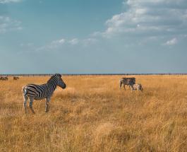 Популяция диких животных в мире сократилась почти на 70% менее чем за 50 лет