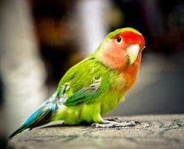 Забавное видео про животных: в сети гадают чем закончилась встреча кота и попугая