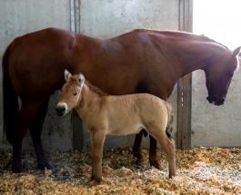 В Сан-Диего провели успешное клонирование вымирающего вида лошадей