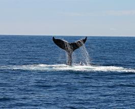 Касатки нападают на лодки у берегов Испании: ученые обеспокоены поведением млекопитающих