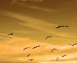 Массовая гибель птиц в Нью-Мексико: эксперты назвали возможные причины инцидента