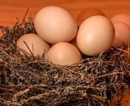Срок годности куриных яиц и советы по правильному хранению полезного продукта