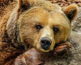 Неожиданный гость: медведь помешал мужчине отдыхать у бассейна
