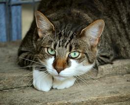 Трогательные фото пожилых котов: снимки вызывающие умиление и желание обнять животных