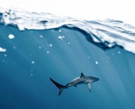 Беременная женщина спасла мужа от нападения акулы у побережья Флориды