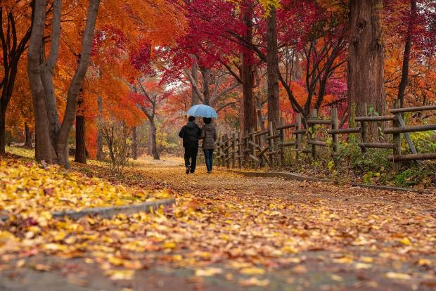 пара гуляет под зонтом по осенней аллее
