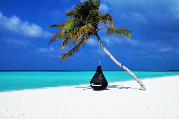 висящий на пальме гамак, пляж, море