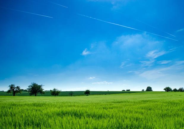 Зеленое поле и синее небо