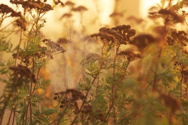 осень паутинка
