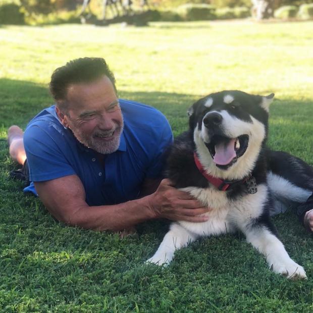 Арнольд Шварценеггер с собакой