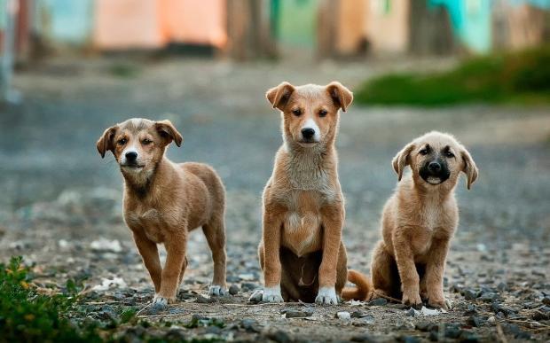 три милых щеночка на мостовой