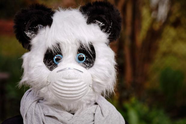 Мягкая Игрушка панда в маске