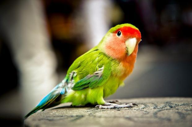 попугай с ярким оперением