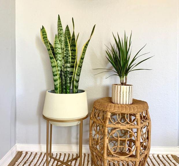 Комнатные растения в плетеных горшках