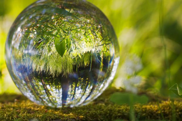 Зелень, большая капля воды