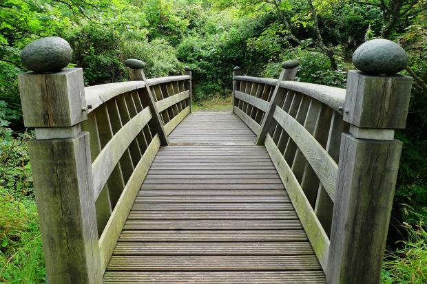 деревянный мост, уходящий в лес