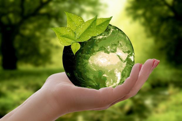 стеклянный шар с зелеными листьями на руке