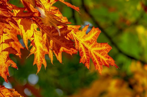 дерево с яркими осенними листьями крупным планом