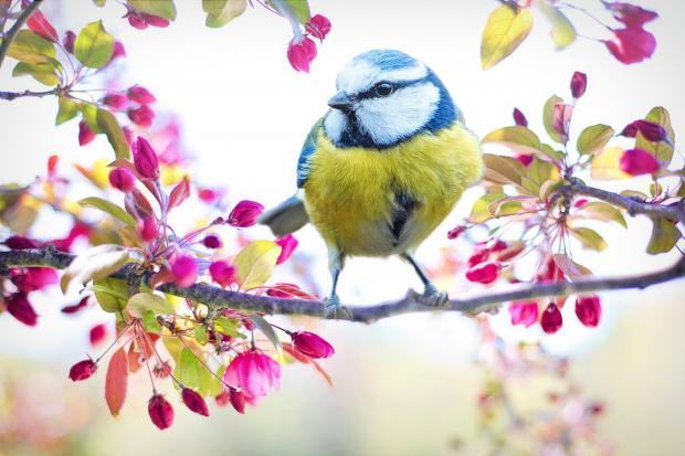 птичка сидит на ветке цветущего дерева