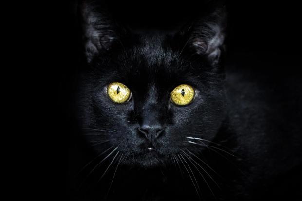 черная кошка с горящими глазами смотрит из темноты
