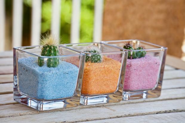 кактусы в 3 стеклянных емкостях с разноцветной почвой