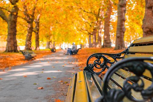скамейка стоит на городской аллее усыпанной желтыми осенними листьями