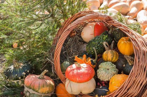 просыпавшаяся корзинка с декоративными овощами