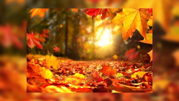 в день осеннего равноденствия солнце пробивается в желто красном лесу