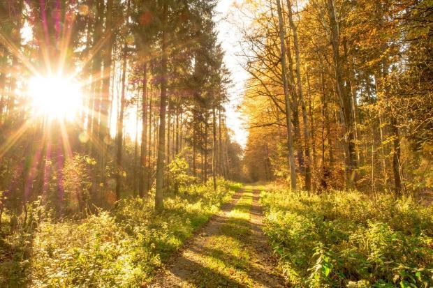 яркое солнце пробивается сквозь деревья осеннего леса