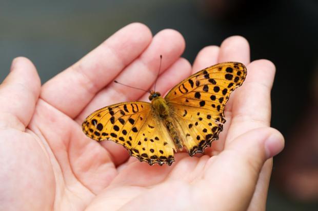 бабочка в ладошках