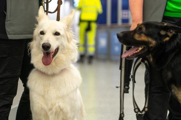 Собаки в аэропорту