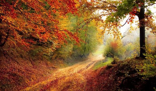 дорога в ярком осеннем лесу