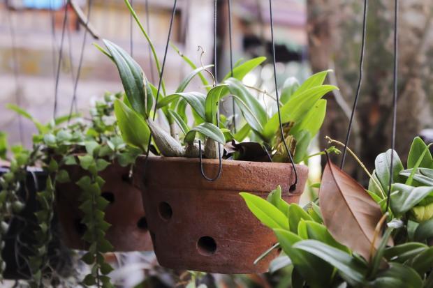 зеленые комнатные растения в подвешенных терракотовых горшках
