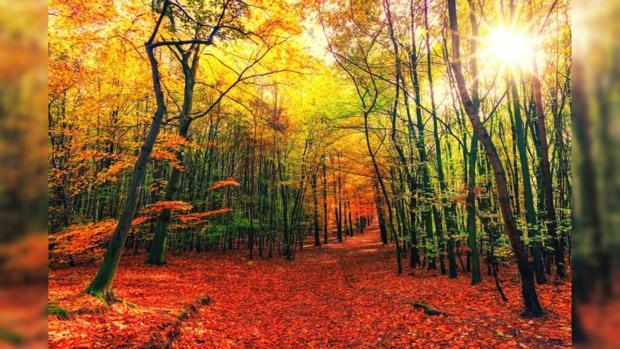 сквозь осенний усыпанный красными листьями лес проглядывает солнце