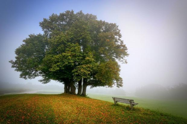 дерево и лавочка
