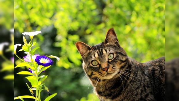 пестрая кошка выглядывает из травы рядом с цветком голубого цвета