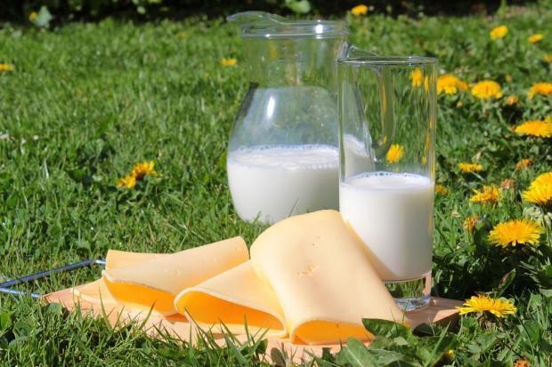 молоко в кувшине и стакане, кусочки сыра на зеленой траве