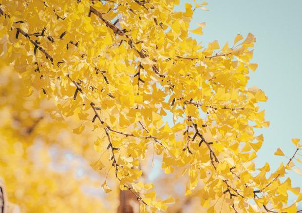 Желтые листья на фоне голубого неба