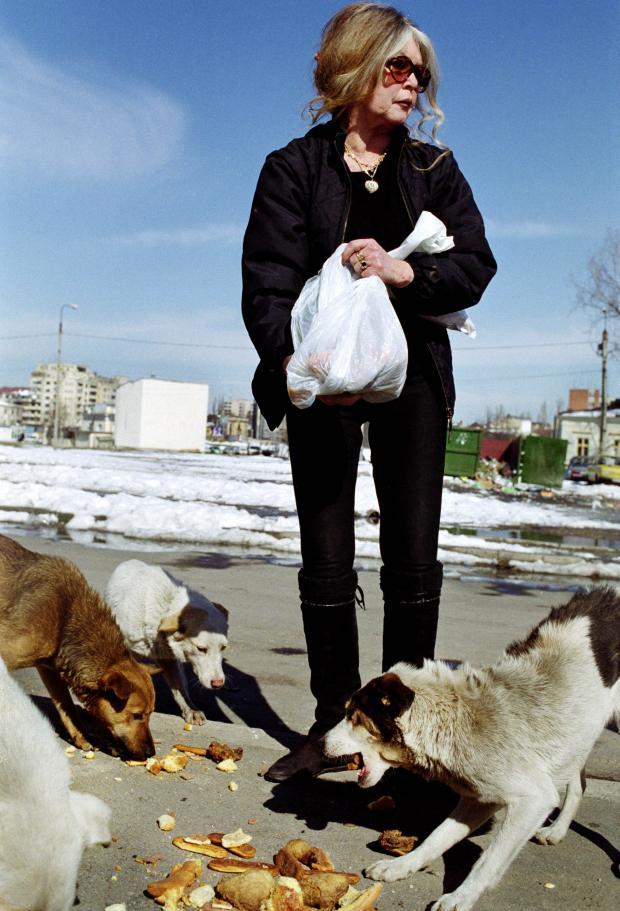 Брижит Бардо кормит собак
