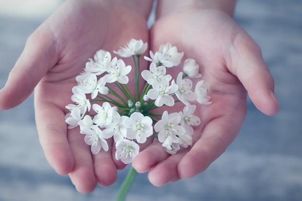 веточка с цветами в ладонях