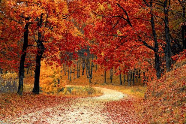 осенний лес, дорога уходящая вниз