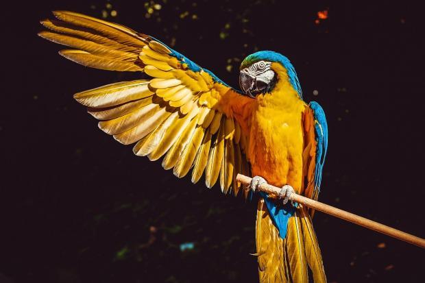красивый попугай с вытянутым крылом
