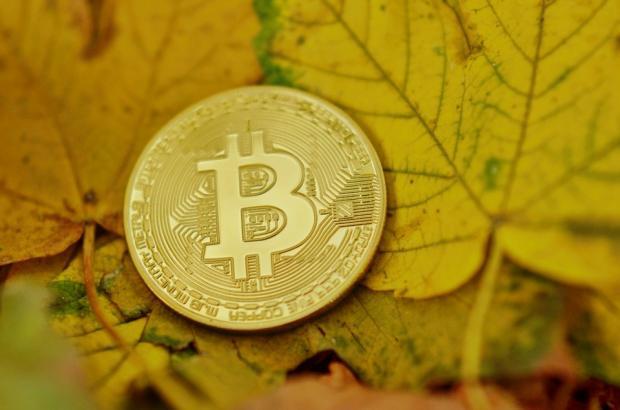 биткоин лежит на желтых осенних листьях