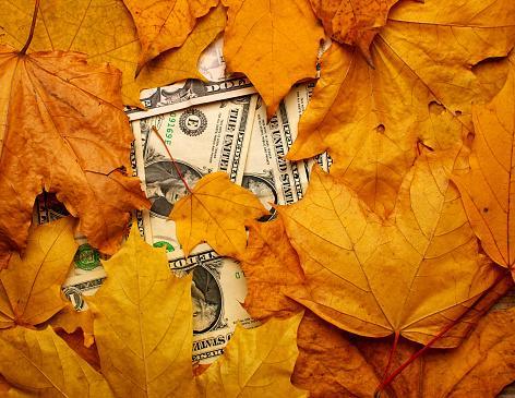 доллары завалены грудой осенних листьев