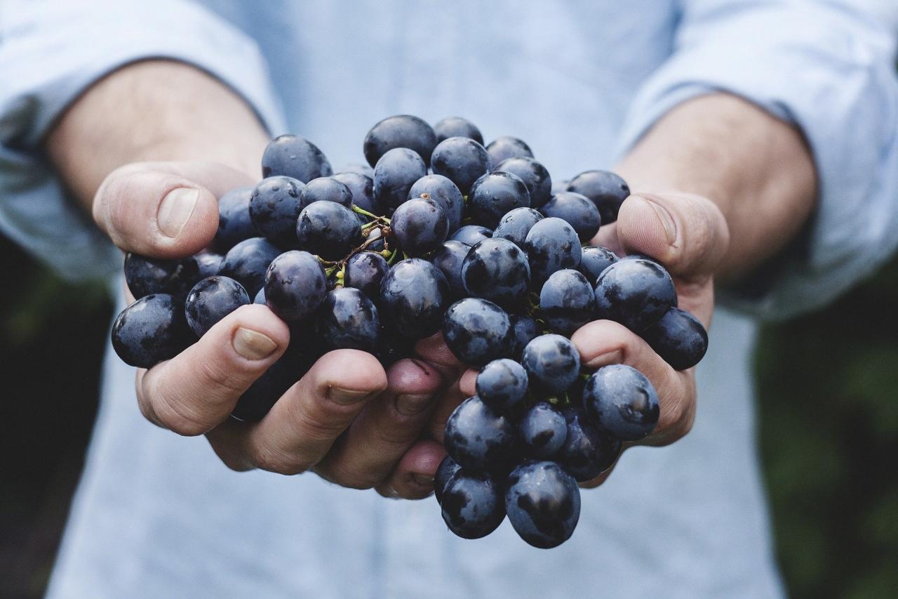 гроздь фиолетового винограда в мужских руках