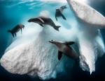 Лучшая фотография года Frozen Mobile Home сделанная в Антарктиде