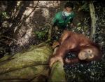 Индонезийский суматранский орангутанг находится под серьезной угрозой из-за истощения тропических лесов
