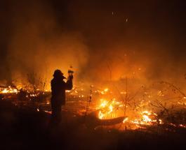 Национальная катастрофа в Боливии: в 2020 году в стране сгорело более 2 млн га насаждений
