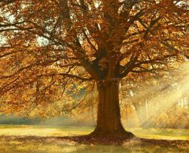 Магнитные бури сегодня: прогноз на 25 октября – активность Солнца остается повышенной